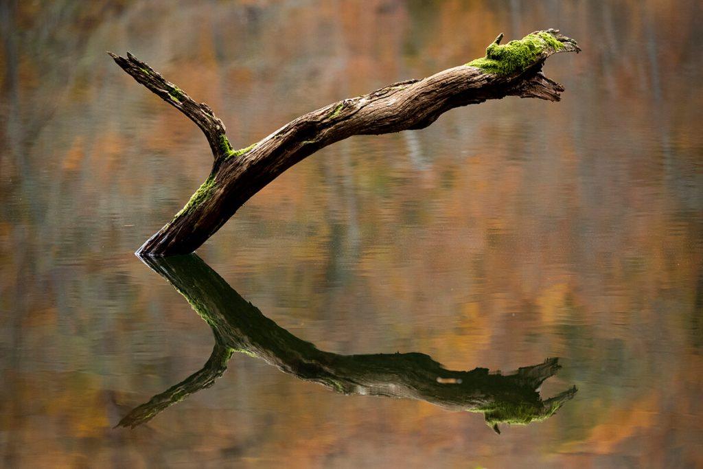 Orhan Ölmez Fotoğrafları