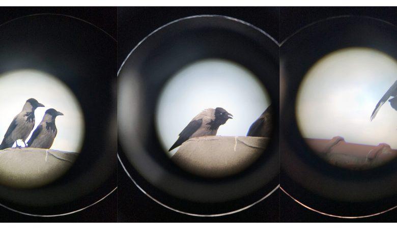 Pandemi Günlerinde Fotoğraf / Çevrimiçi Fotoğraf Sergisi