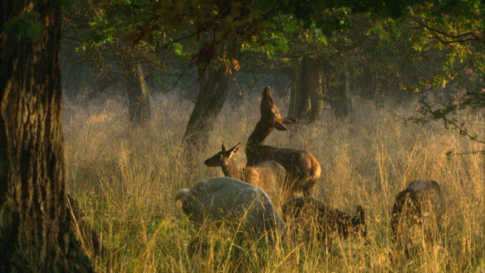 SALT'ın Bu son şansımız mı? Gösterim Programı'nın Yeni Filmi: Das geheime Leben der Bäume/Ağaçların Gizli Yaşamı
